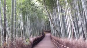 The bamboo grove in Arashiyama, near Kyoto